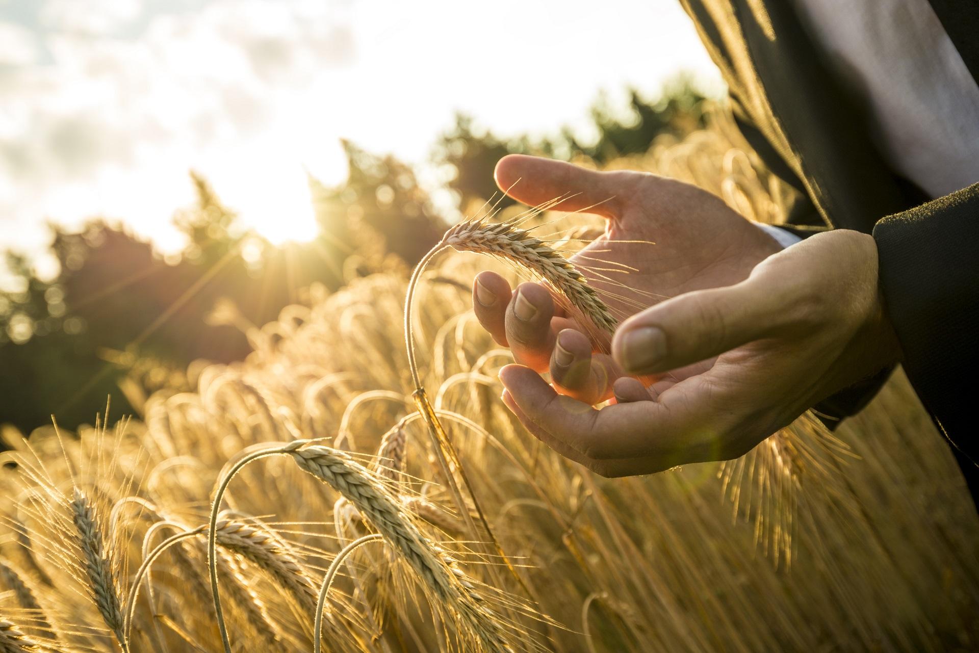 bez GMO, VLOG