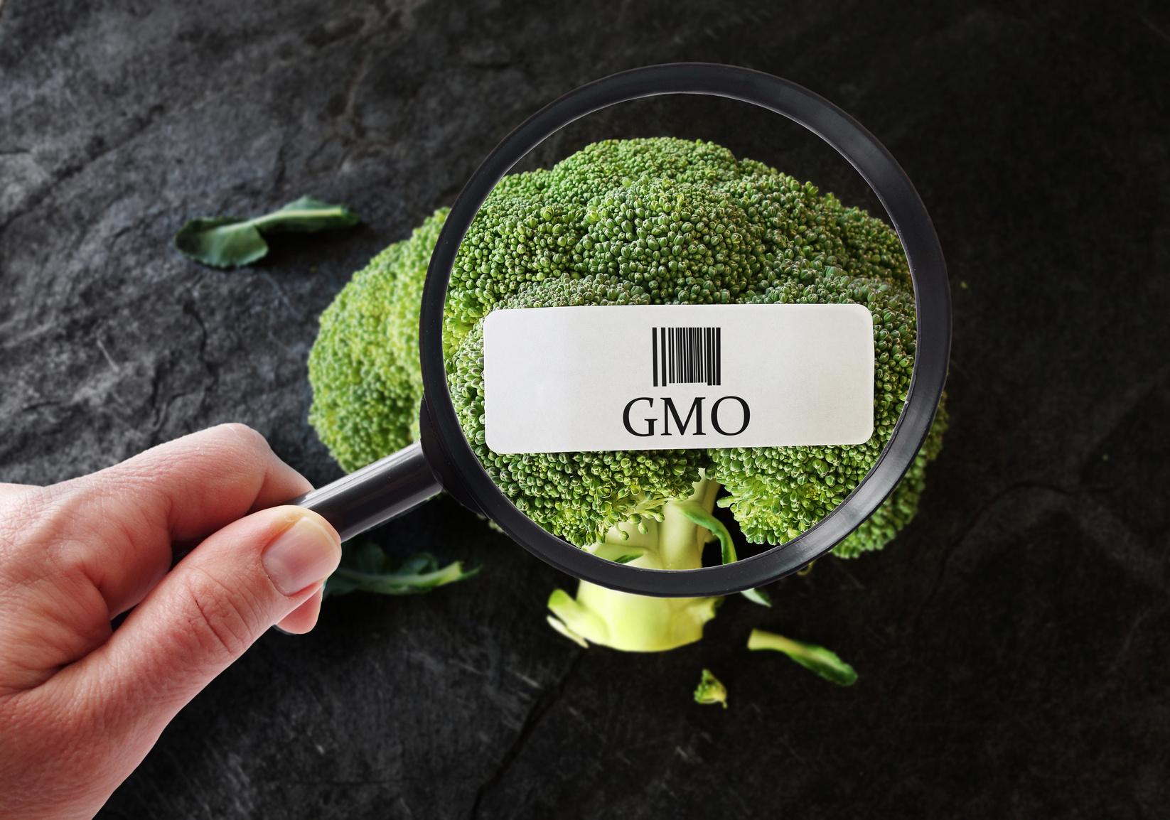 Certyfikacja VLOG, wdrożenie VLOG, szkolenia VLOG, GMP+, non-GMO